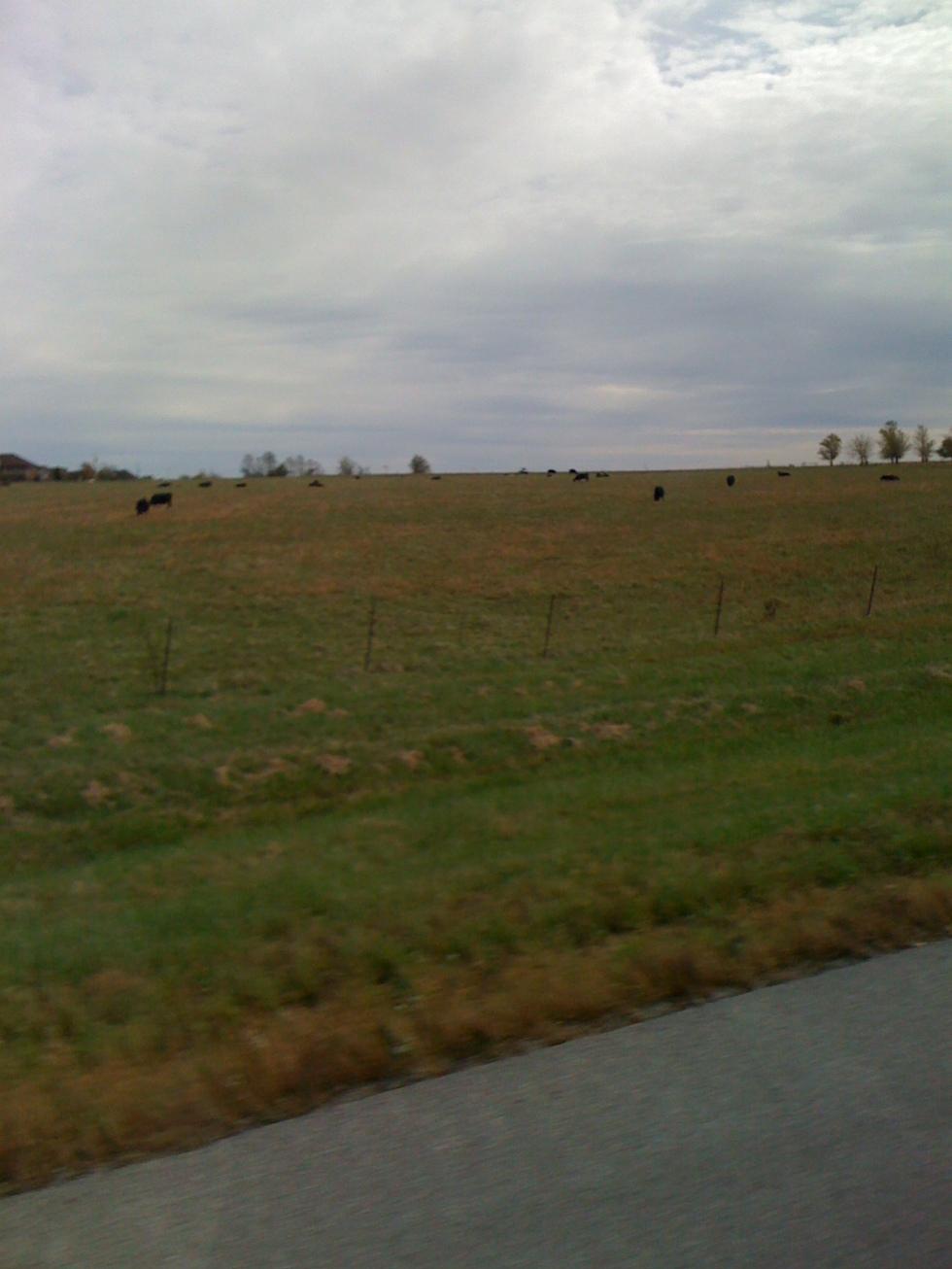 Hay fields in Midwest