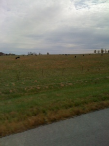 Midwest corn fields